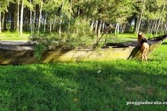 pioggiadorata_ponte_delle_barche-126